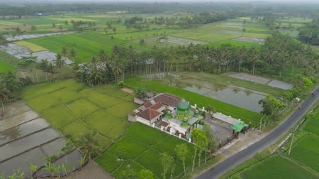 cami : mosque in middle rice fields in Indonesia. aerial view farmland with rice terrace agricultural crops in rural areas Java Indonesia Aerial footage.
