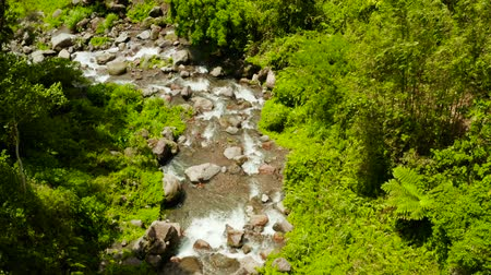 boulders : Mountain river in the rainforest through the green jungle covered with green forest and palm trees top view. River in the green forest. Camiguin, Philippines. Stock Footage