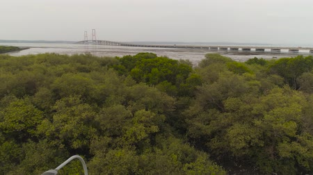 ponte sospeso : aerial view mangroves and suspension cable bridge Suramadu over madura strait connecting islands Java and Madura. surabaya high coast bridge with highway. java, indonesia