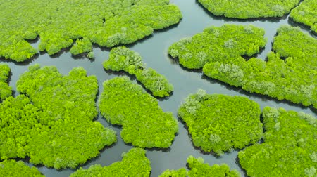 gyertyafa : Aerial view of rivers in tropical mangrove forests. Mangrove landscape, Siargao,Philippines. Stock mozgókép