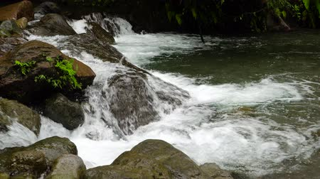 mindanao : Mountain river in the rainforest through the green jungle. River in the green forest. Camiguin, Philippines.