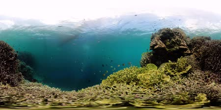 šnorchl : The underwater world of coral reef with fishes at diving 360VR. Coral garden under water, Philippines, Camiguin.