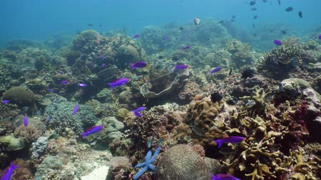 entdecken : Tropical coral reef. Underwater fishes and corals. Camiguin, Philippines.