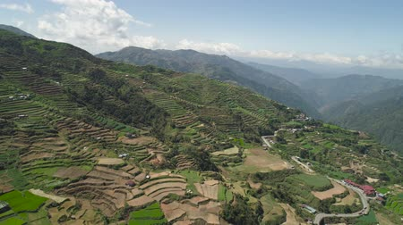 pianta riso : Aerial view rice terraces, agricultural farmland on slopes mountains valley. Cultivation agricultural products in mountain province. Mountains covered forest, trees. Cordillera region. Luzon, Philippines, Baguio province.