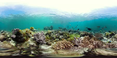 descobrir : Tropical fishes and coral reef, underwater footage 360VR. Seascape under water. Camiguin, Philippines.