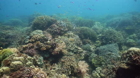 keşfetmek : Underwater Scene Coral Reef. Tropical underwater sea fishes. Camiguin, Philippines.
