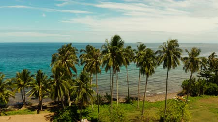mořská voda : Landscape with coconut trees and turquoise lagoon, view from above. Seascape with palm trees and a pebbly beach, Philippines, Camiguin,aerial view. Dostupné videozáznamy