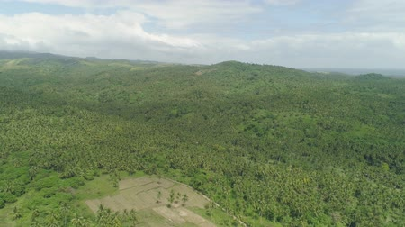 kokosový ořech : Aerial view grove of palm trees in the hills against sky and clouds. Hills covered with green vegetation and coconut palms. Philippines, Luzon. Dostupné videozáznamy