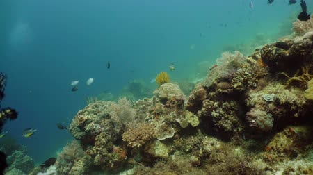 descobrir : Tropical Fishes on Coral Reef, underwater scene. Camiguin, Philippines. Travel vacation concept