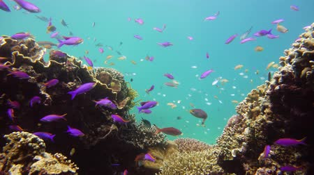 yaban hayatı : Coral reef underwater with tropical fish. Hard and soft corals, underwater landscape. Travel vacation concept