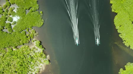 siargao : Boats sails in the mangroves among green trees aerial view. Mangrove jungles, trees, river. Mangrove landscape
