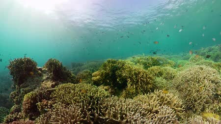 scuba diving : Beautiful underwater landscape with tropical fishes and corals. Life coral reef. Camiguin, Philippines.