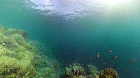 keşfetmek : Tropical coral reef 360 panorama. Underwater fishes and corals. Camiguin, Philippines. Stok Video