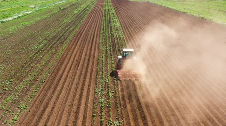 プラウ : Tractor Hilling Potatoes with disc hiller in a potato field top view. Farmer in tractor preparing land with seedbed cultivator in farmlands