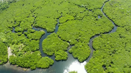 marsh : Aerial panoramic mangrove forest view in Siargao island,Philippines. Mangrove landscape