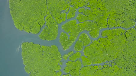 marsh : Tropical landscape with mangrove forest in wetland from above on Siargao island, Philippines.