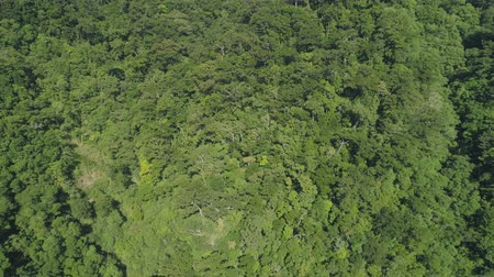 luzon : Aerial view of mountains with green forest, trees, jungle. Slopes of mountains with tropical rainforest. Philippines, Luzon. Tropical landscape in Asia. Stock Footage