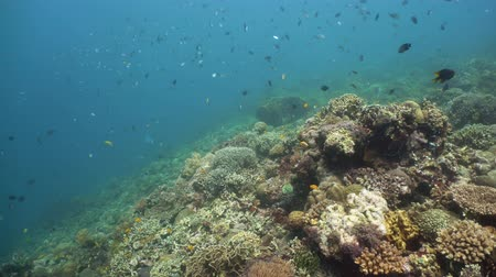 šnorchl : Underwater fish reef marine. Tropical colorful underwater seascape with coral reef. Camiguin, Philippines.