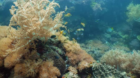 descobrir : Coral reef underwater with tropical fish. Hard and soft corals, underwater landscape. Travel vacation concept