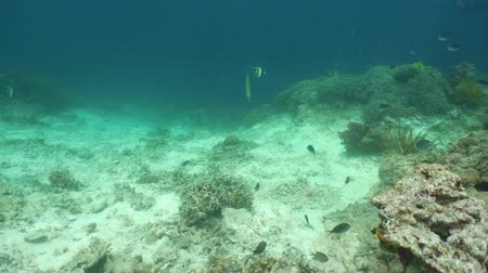 derinlik : Tropical fishes and coral reef, underwater footage. Seascape under water. Camiguin, Philippines.
