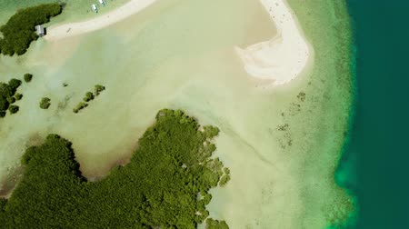 gyertyafa : Mangrove trees on coral reef surrounded by sea blue water. aerial view. Mangrove landscape, Philippines.