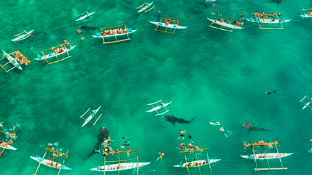 кит : Tourists are watching whale sharks in the town of Oslob, Philippines, aerial view. Summer and travel vacation concept