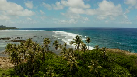 siargao island : Coastline island with palm trees and the beach at low tide. Blue ocean and waves. Siargao, Philippines.