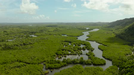 marsh : Mangrove rainforest with green trees in the sea water, aerial view. Tropical landscape with mangrove grove.