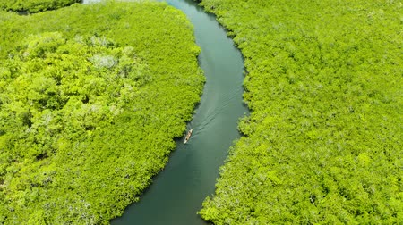 siargao island : Tropical landscape with mangrove forest in wetland from above on Siargao island, Philippines.