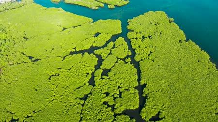 mangue : Tropical landscape with mangrove forest in wetland from above on Siargao island, Philippines.