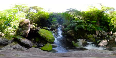 mindanao : Mountain river in the rainforest through the green jungle 360VR. River in the green forest. Camiguin, Philippines.