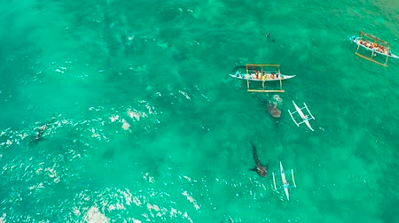 philippine : People snorkeling and and watch whale sharks from above. Oslob, a famous spot for whale shark watching. Philippines, Cebu. Stock Footage