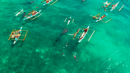 кит : People snorkeling and and watch whale sharks from above. Oslob, a famous spot for whale shark watching. Philippines, Cebu. Стоковые видеозаписи