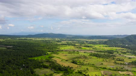 palmeira : rice fields, agricultural land in countryside, aerial view. farmland with rice terrace agricultural crops in rural areas. Aerial footage. Vídeos