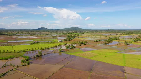 fértil : Rice fields are flooded with water. Tropical landscape with fertile soil. Leyte Island, Philippines. Agriculture concept. Vídeos