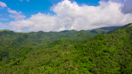thick : Mountain landscape with rainforest, aerial view. Mountains on the island of Luzon, Philippines. Hills covered with jungle. Summer and travel vacation concept.