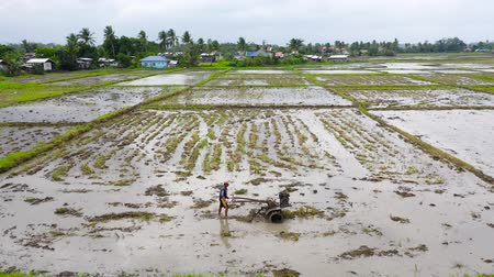tiller : Farmer using walking tractor plowing in rice field to prepare the area to grow rice. Work in a rice field in the Philippines. Stock Footage