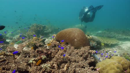 coral garden : Coral reef underwater with fishes and marine life. Coral reef and tropical fish. Camiguin, Philippines.