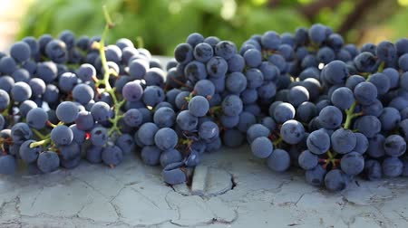 blue grapes harvest. the bunches of grapes lie on the table. home winemaking