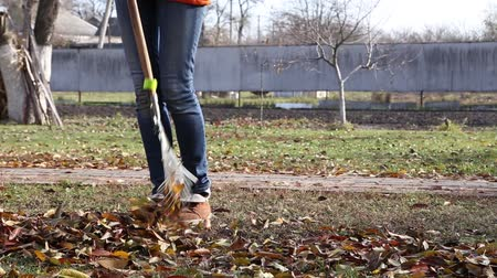 Autumn leaves woman clean rake. autumn garden work Стоковые видеозаписи