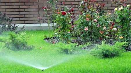 irrigate : Watering of a bed by system of automatic watering