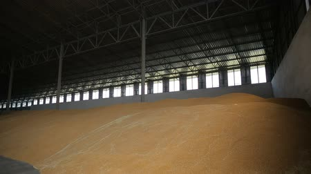 Łopata : Huge storage facility of agricultural crops. Covered bulk stock. Wheat grain at mill storehouse. Agro logistics concept.