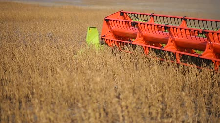 combine harvester collects soybean