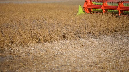 соя : Soy bean combine harvester working in soybean field Стоковые видеозаписи