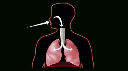anatomia : Inhale and exhale with airflow indicated, seamless loop Vídeos