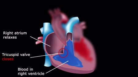 поток : Blood flow through the heart tutorial Стоковые видеозаписи