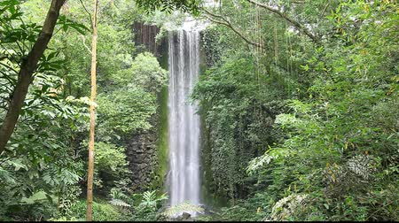 floresta tropical : Waterfall in tropical forest of Singapore (bird park)