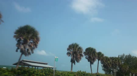 batı : Drive along a Florida beach, with palm trees, Sarasota, Florida. Stok Video