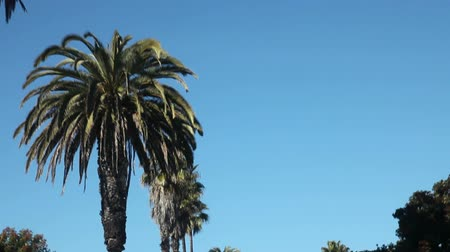 árvores : Drive under palm trees and blue sky