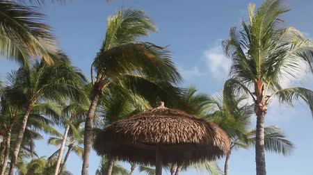 Windy weather in Aruba, the Caribbean with palm trees, palapas, blue sky.